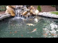 Catfish Backyard Pond by Pin By Carol Canadyan On Bullhead Catfish Pinterest Catfish