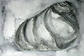 moon snail project rosemary u0027s blog