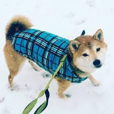 Diy Pronunciation 19 Dog Breed Names You Might Be Pronouncing Wrong Barkpost