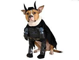 Female Dog Halloween Costumes 70 Pet Masquerade Images Animals Animal