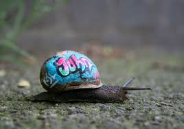 Where Can You Find Snails In Your Backyard To Prevent Snails From Getting Stepped On People Pimp Out Their