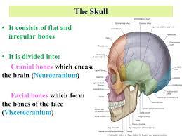 Human Anatomy Skull Bones Anatomy Of The Skull Dr Rania Gabr Ppt Video Online Download