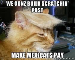 Cat Meme Images - trump cat meme cat