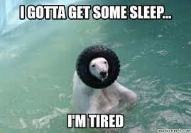 Tired Meme - polar bear