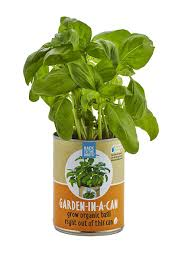 what to grow in a vegetable garden amazon com back to the roots garden in a can organic basil
