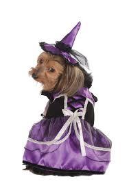 Extra Large Dog Costumes Halloween Dog Costume Halloween 2017 Mimi U0026 Tara