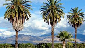 what are some different types of palm trees reference com