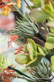 Succulent Rock Garden by 2488 Best Succulents Images On Pinterest Succulents Garden