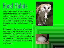 deanna sapalio barn owls pd 5