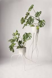 Cascading Indoor Plants by 184 Best Flowers And Plants Images On Pinterest Plants