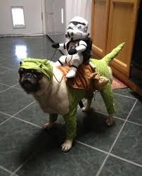 English Bulldog Halloween Costumes Dogs Deserve Halloween Costumes