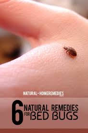 natural bed bug remedies 6 natural cures for bed bugs how to cure bed bugs naturally