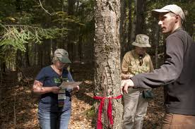 climate change transforms great lakes forests ncpr news