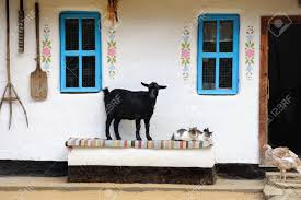 rural life scene goat and a cat on the bench farmhouse stock