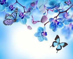 blue orchid flower orchid blue flowers beautiful butterflies orchid flower butterfly