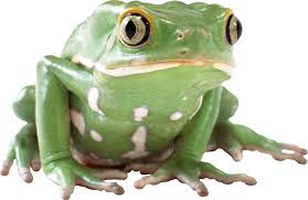 frogs gallery isolated stock photos by nobacks