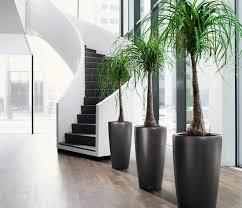 home interior plants indoor plants decoration designs guide