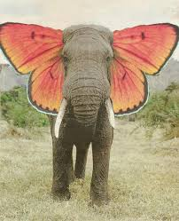 9 best elephants images on animals drawings and elephant