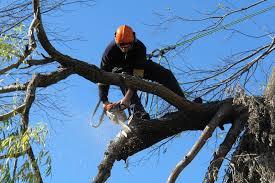 tree care service company ostvig tree care minneapolis mn
