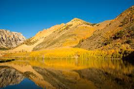 fall color aspen leaf beauty along california u0027s eastern sierra