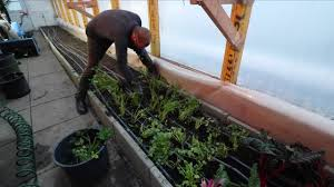 planting a winter garden youtube