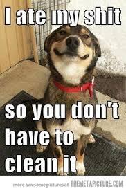 Eat Shit Meme - my dog eat poop dog eat poop meme terrier mix dogs pictures