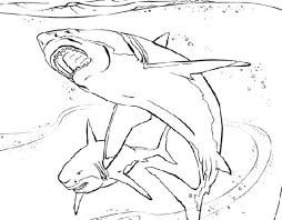 print u0026 download free coloring pages for boys shark