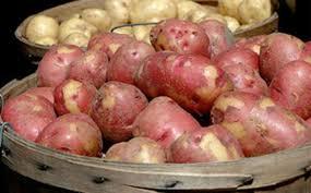 bioplastic research paper new research investigates potato bioplastic and corn based glue