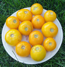 great basin native plants lemon boy tomato great basin natives