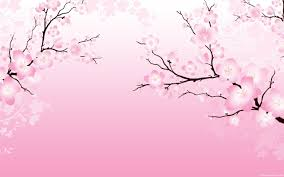 cherry blossom wallpaper for walls cherry blossom desktop
