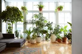 houseplants 7 gorgeous houseplants that will purify the air and make you happier
