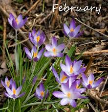 Flower Of The Month Sophieco Wild February Flower Of The Month
