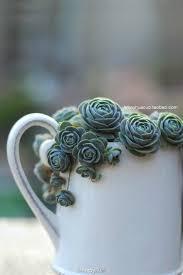 489 best images about gardens u0026 succulents on pinterest gardens