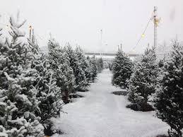 dubois u0026 sons christmas tree farm home facebook