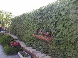 get superb eco friendly house with plants for fences outdoor