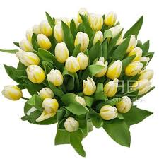white tulips milan florist local flowers white tulips bouquet delivery