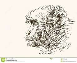 monkey sketch stock vector image 41151246