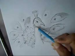 how to draw beautiful drawing how to draw a peacock with beautiful feathers step by step for