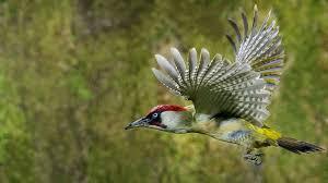 desktop hd wallpaper of birds free download