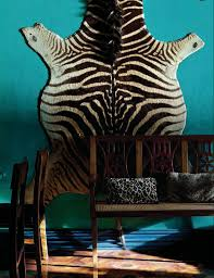 zebra rug on turquoise wall interiors by color