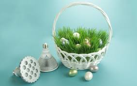 easter basket grass real easter basket grass aerogarden