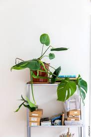 395 best indoor gardens images on pinterest plants indoor