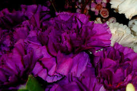 Purple Carnations Wedding Flowers Fit For A Princess My Happy Crazy Life