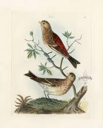 bolton bird prints nest u0026 egg prints 1845