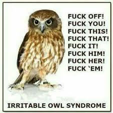 Fuck That Meme - irritable owl syndrome hilarious pinterest meme hilarious and