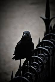 halloween background crow 200 best the crow images on pinterest the crow brandon lee and