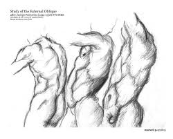study of the external oblique by marpu on deviantart