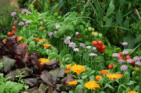 companion planting how to deter pests and encourage beneficial