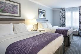 Comfort Inn Bypass Road Williamsburg Va Comfort Inn Williamsburg Gateway 2017 Room Prices Deals