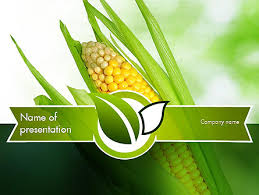 corn on the cob powerpoint template backgrounds 11296